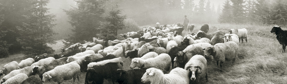 About Crucci New Zealand Wool Company